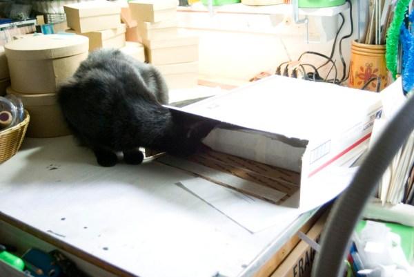 black cat looking in box