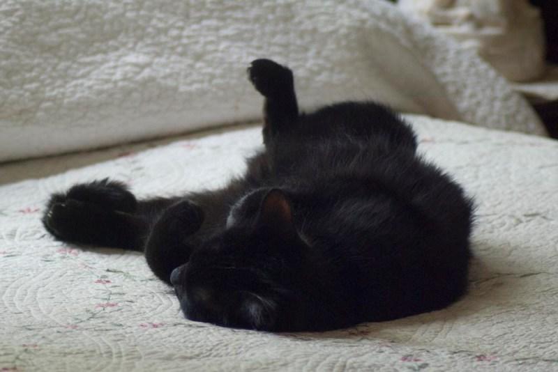 black cat sleeping on back.
