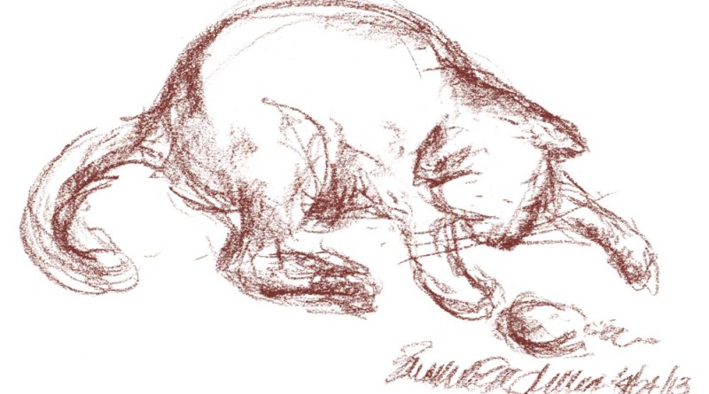 conte sketch of cat playing