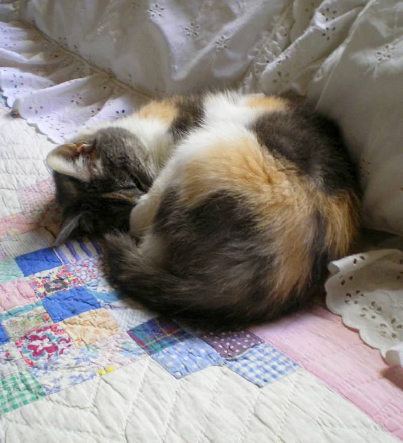 calico cat sleeping on quilt
