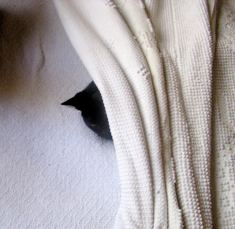 black cat under bedspread