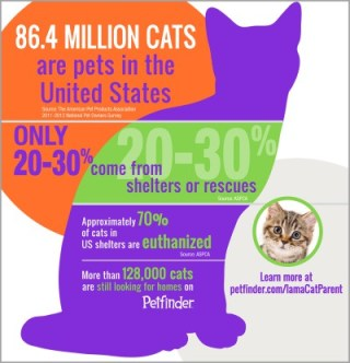 pets-in-us-full