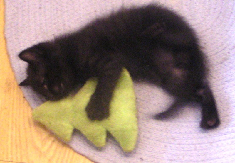 black kitten with catnip toy