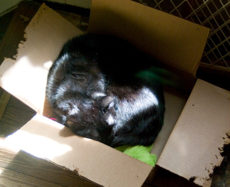 black cat sleeping in box