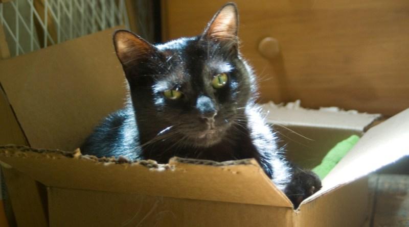 black cat in box.