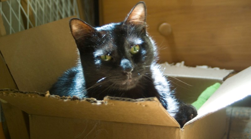 black cat in box.