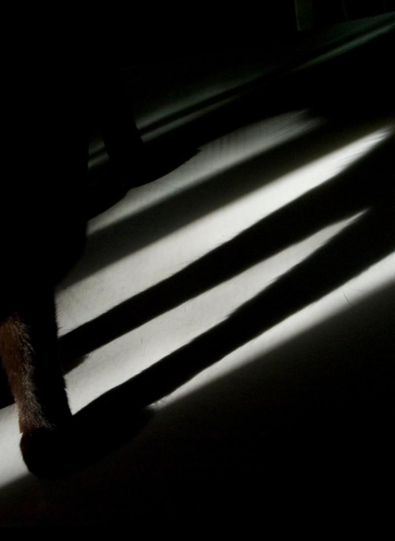 photo of cat's leg shadows