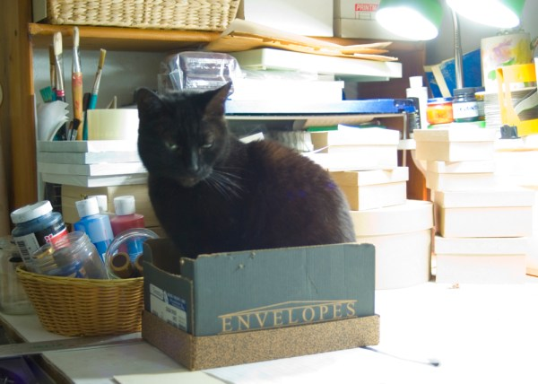 black cat in box with art materials