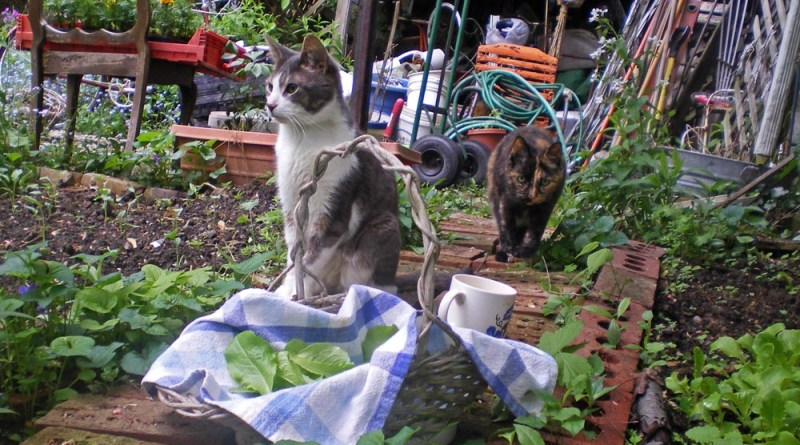 cats and garden