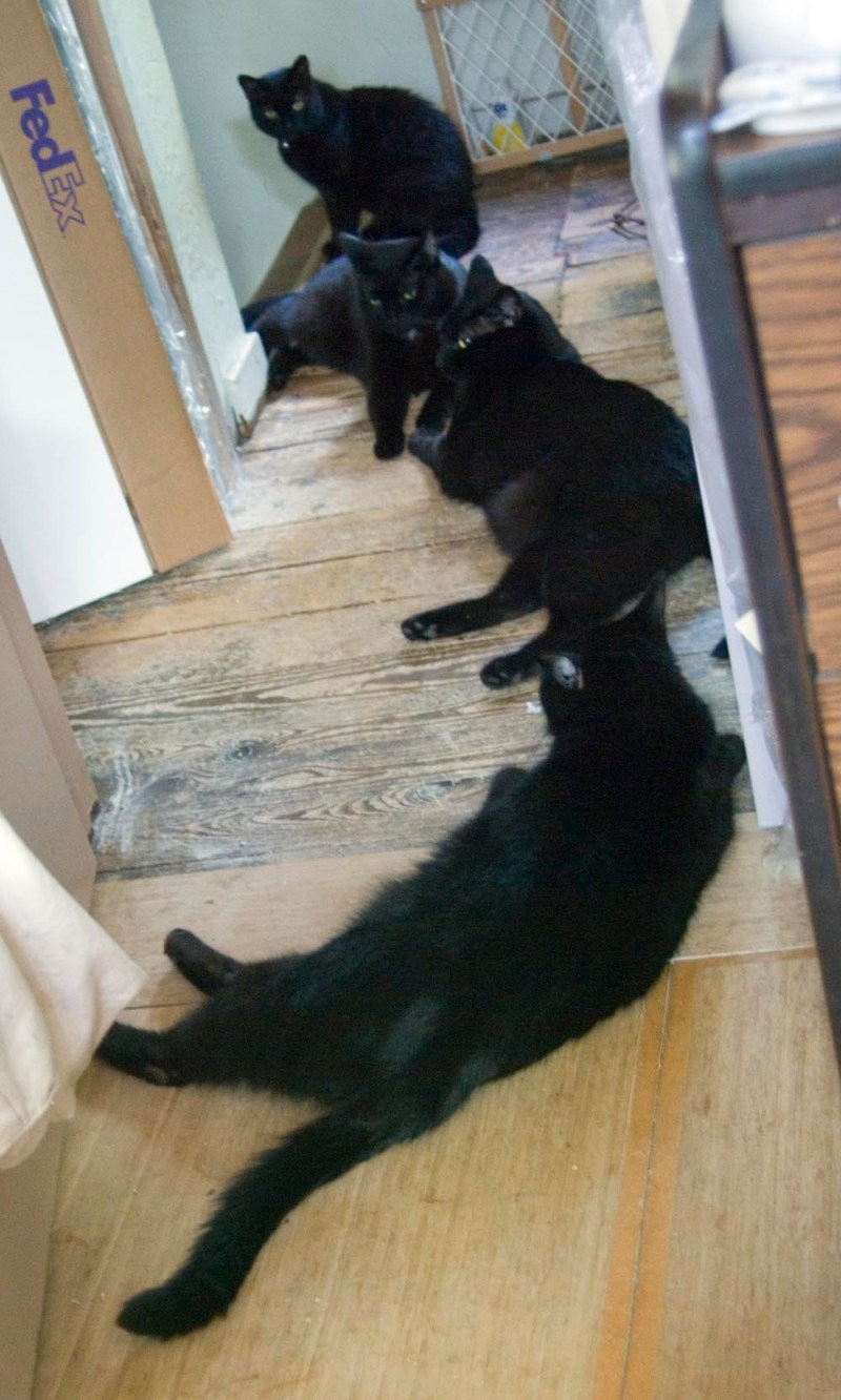 four black cats in a row