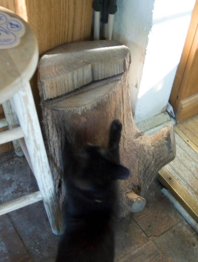 Cat scratching on log
