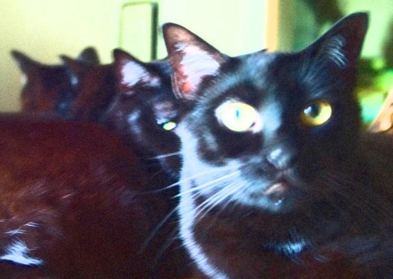 black cat with wild eyes