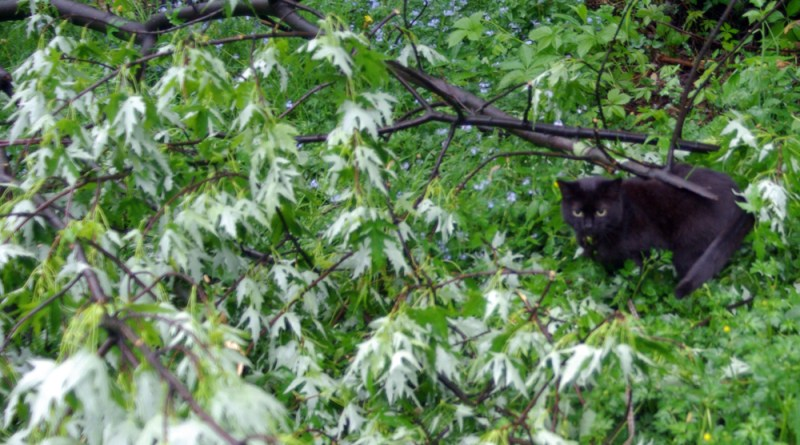 black cat in fallen tree