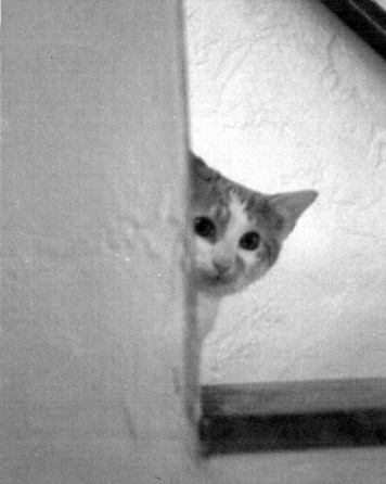 kitten peeking around corner