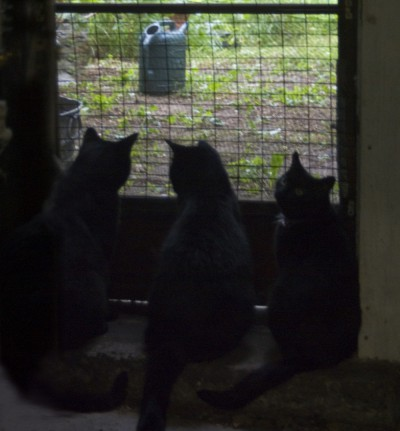 three black cats at door