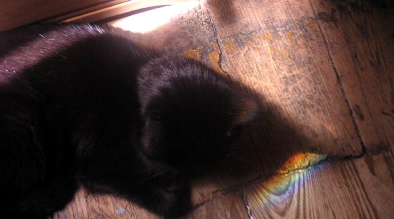 black cat with rainbow