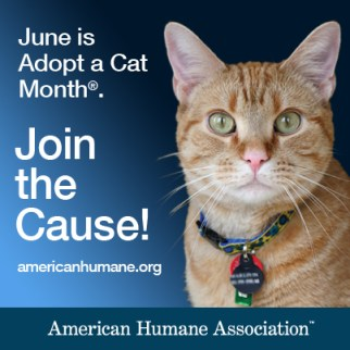 american humane cat adoption month logo