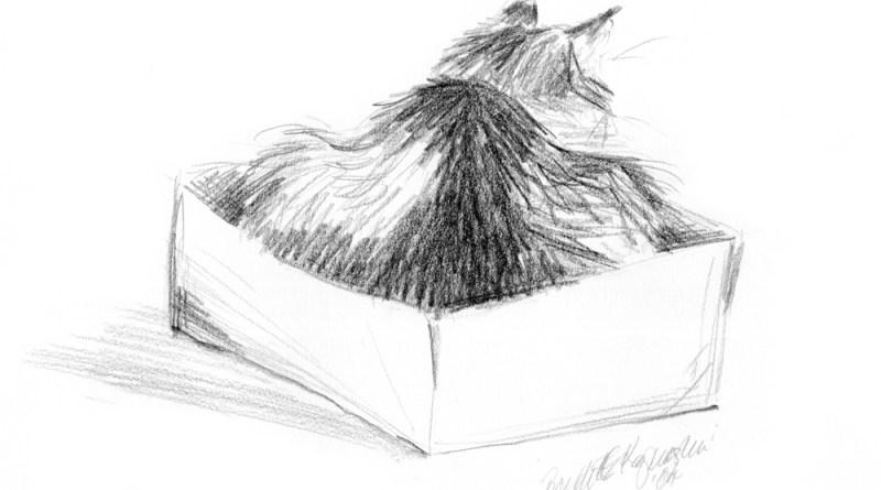 pencil sketch of cat in box