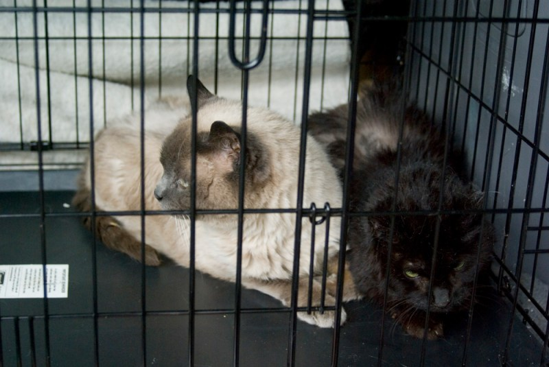 two cats in cage