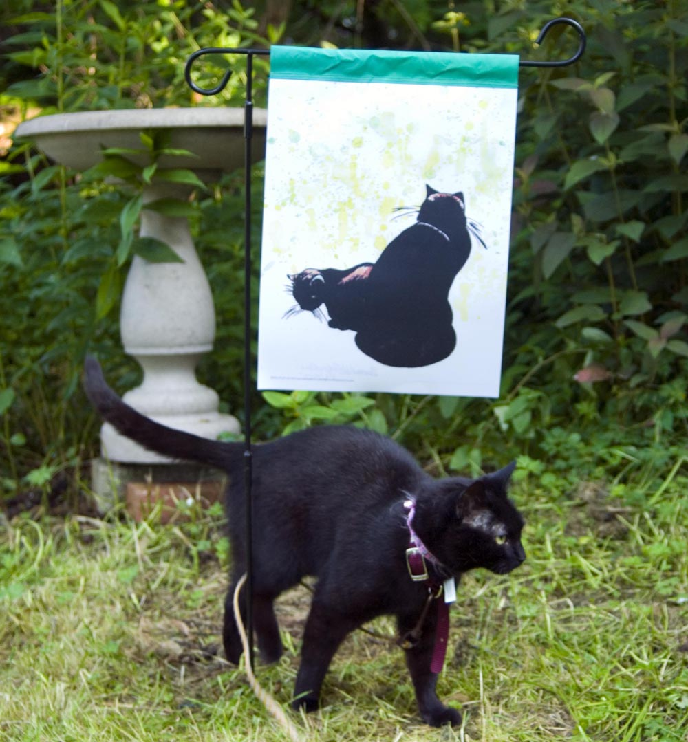 black cat with garden flag