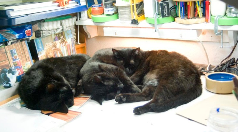 three black cats.