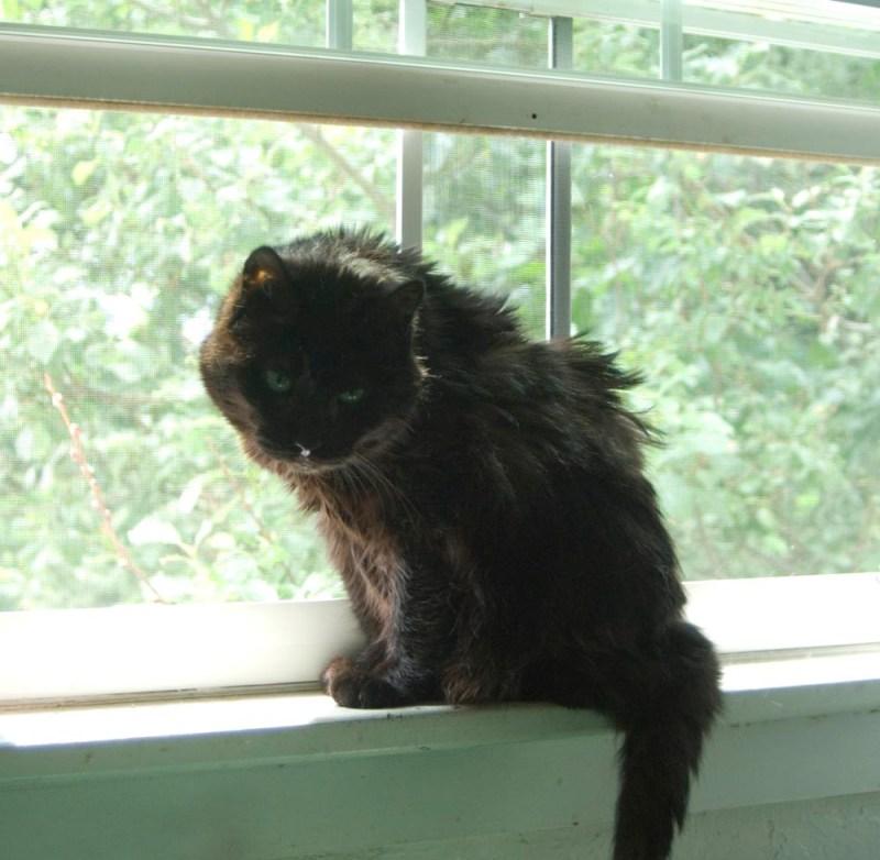 black cat on windowsill
