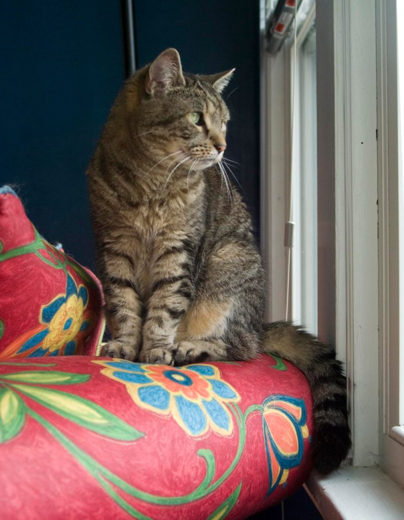 tabby cat on couch