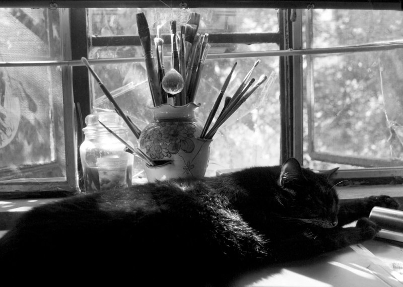 black cat in window black and white photo