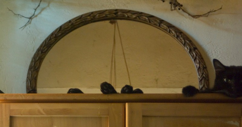 black cat on cabinet
