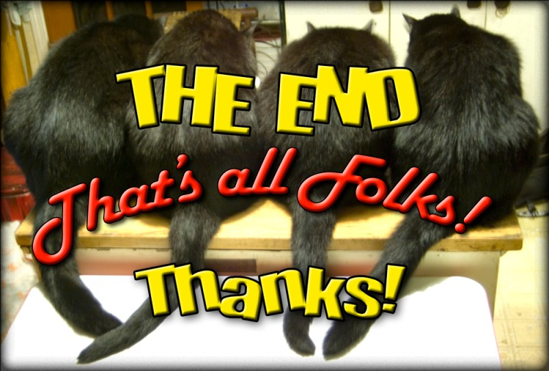four black cat behinds
