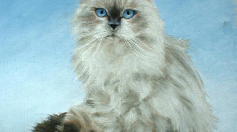 pastel portrait of a himalayan cat