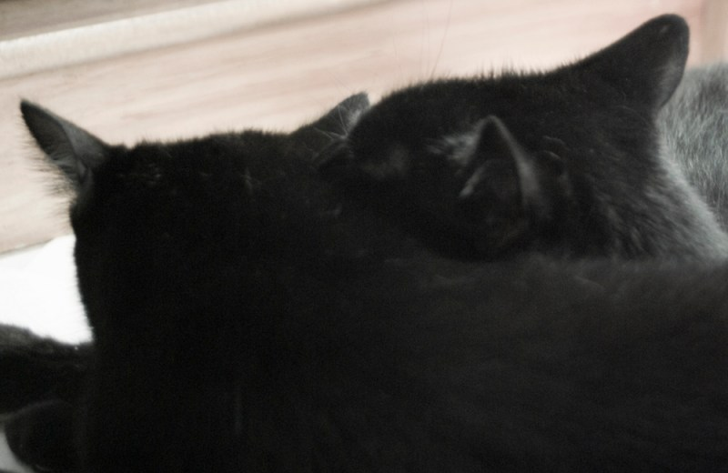 two black cats.