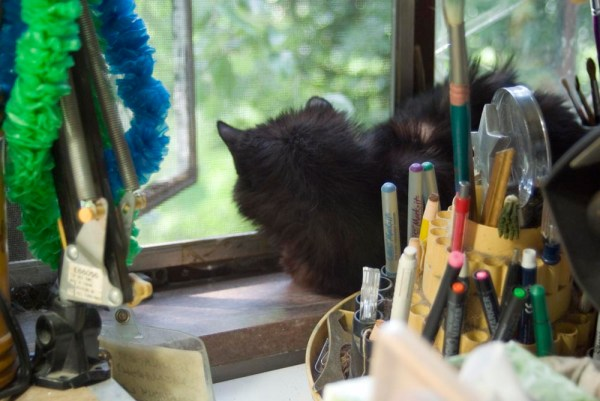 long-haired black cat on windowsill