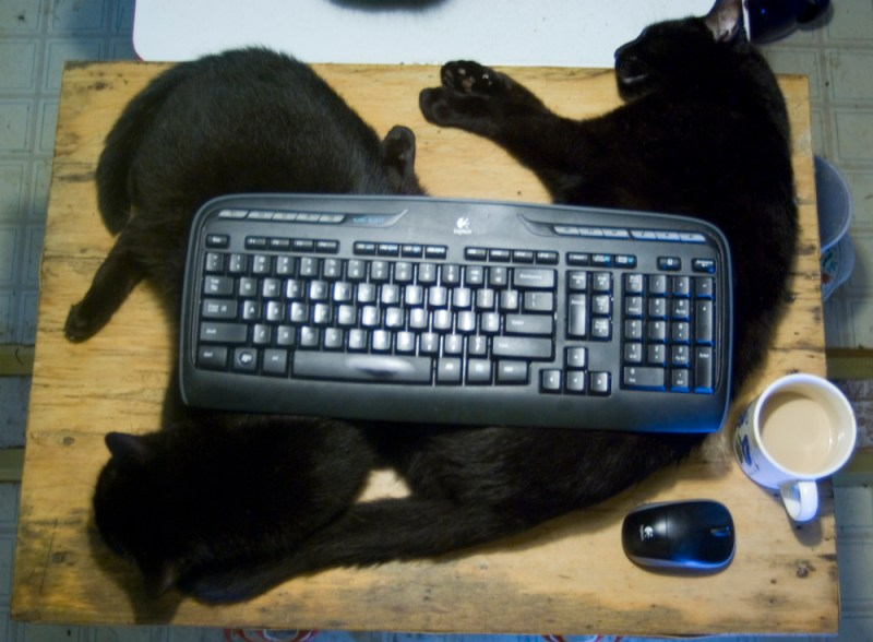 two black cats with keyboard