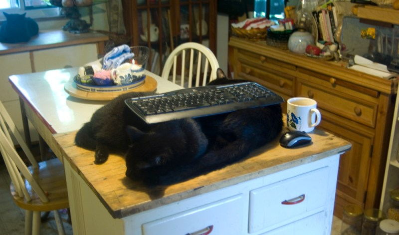 two black cats wth keyboard
