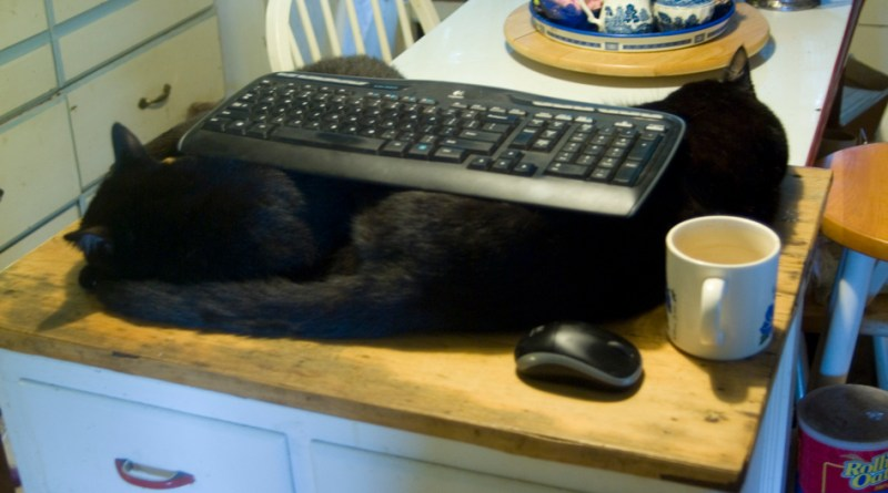 two black cats with keyboard across