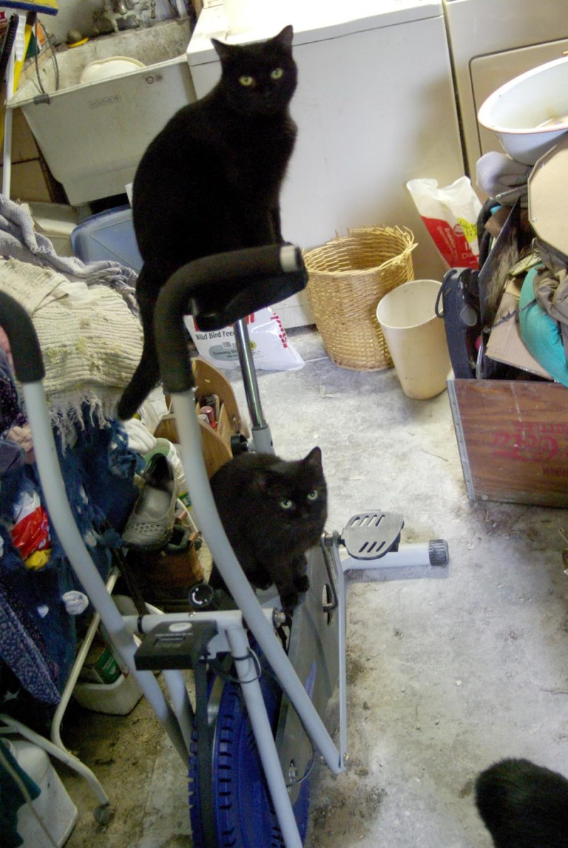 two black cats on exercise bicycle