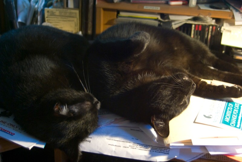 two black cats on desk