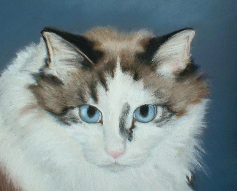 detail of pastel cat portrait