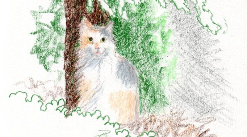 colored pencil illustration of cat under tree