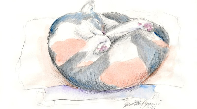 pencil and watercolor sketch of cat
