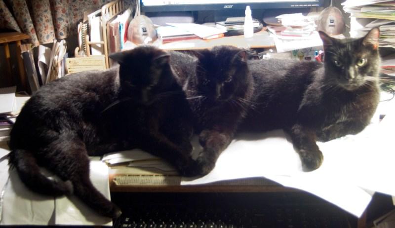 three black cats on desk