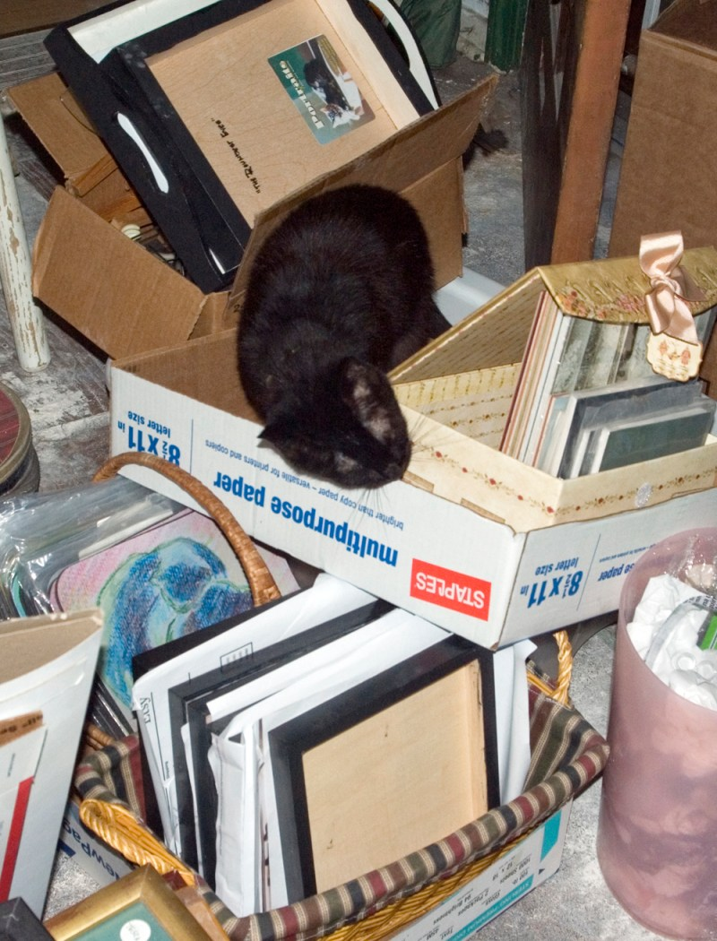 black cat in boxes
