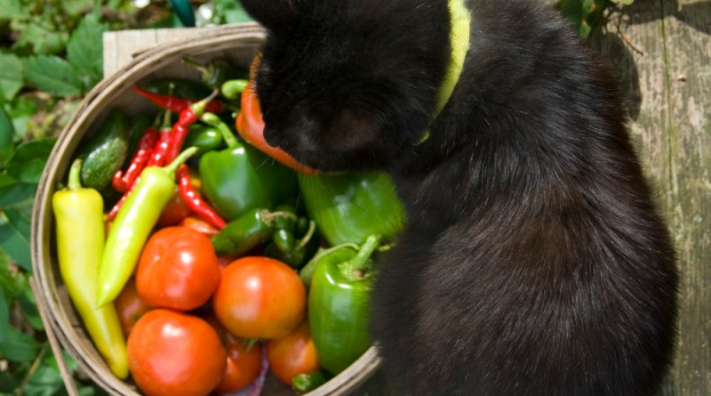 black cat with basket of vegetables.