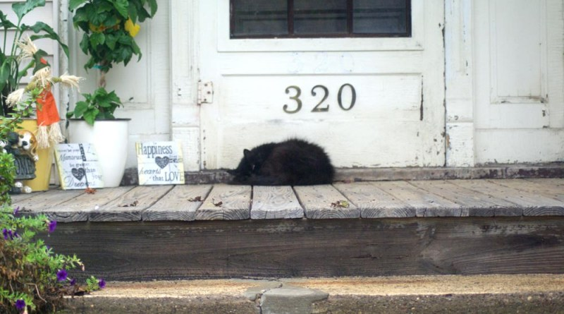 black cat sleeping on porch