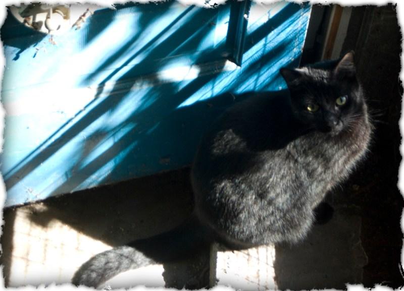 black cat in front of blue door.
