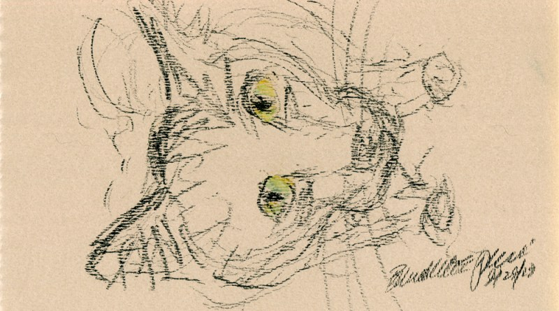 distorted closeup sketch of cat