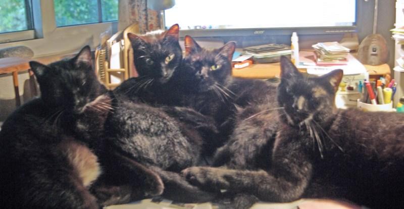 four black cats cuddling