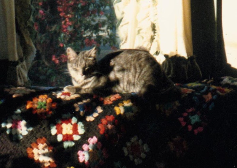 gray cat on afghan