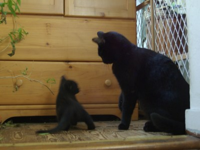black cat with black kitten